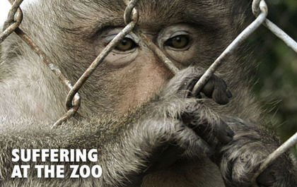 Bad things about zoos - Zoos